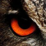 owl-50267_1280-eye-left